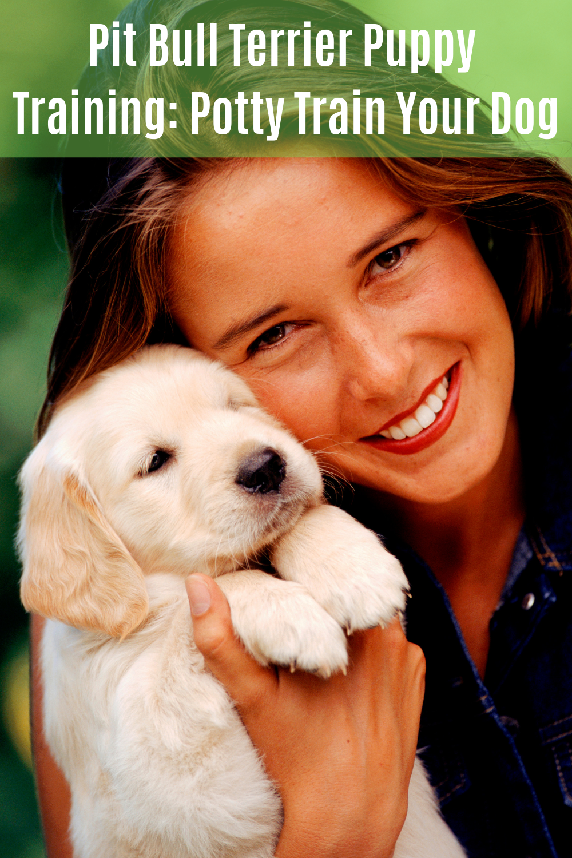 Facebook TShirt Pitbull terrier, Bull terrier puppy