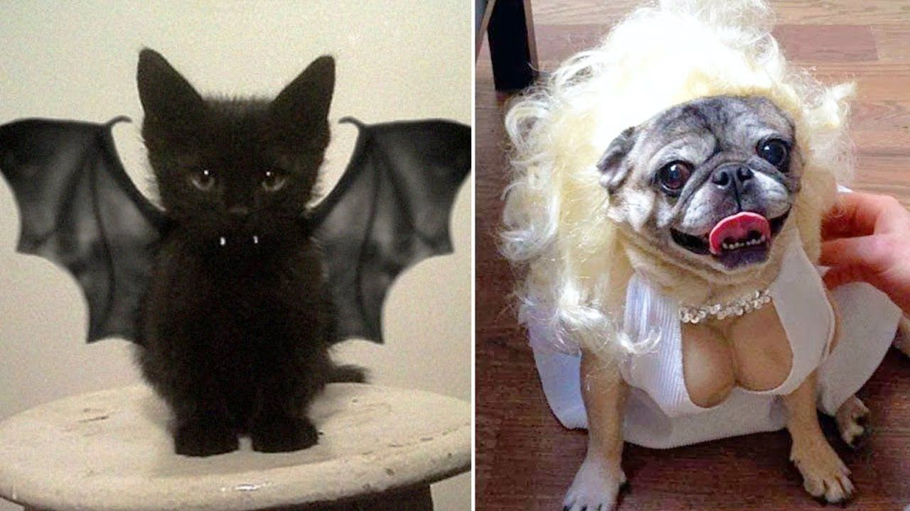 Most Creative Halloween Costumes for Pets YouTube