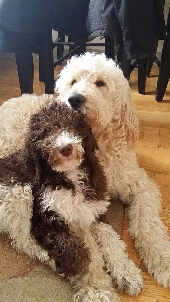 I love these dogs!