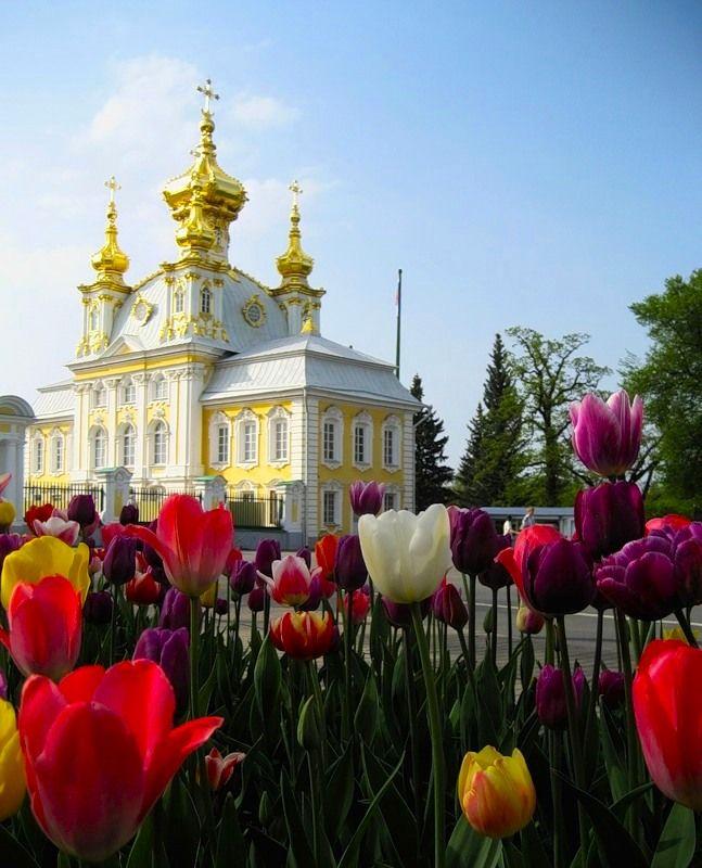 Peterhofissa vietetään tänä vuonna juhlavuotta. Tulppaanit kukkivat kaikkina vuosina, oli juhla tai ei,