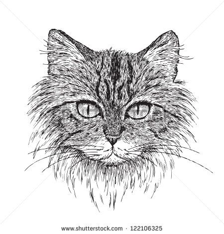 Easy Pen and Ink Drawings of Animals   Detailed ...
