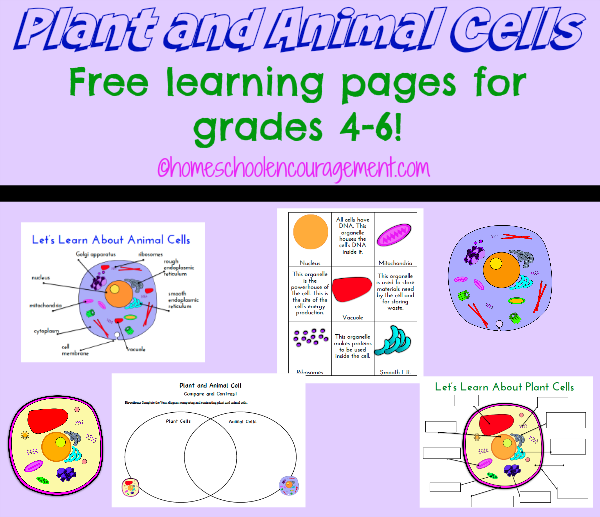 plant and animal cell printables grades 4 6 plants animal and homeschool. Black Bedroom Furniture Sets. Home Design Ideas