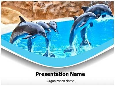 Dolphin Powerpoint Template Is One Of The Best Powerpoint