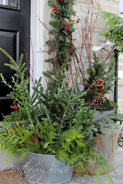 Cut a variety of evergreens (add pinecones and berries) and stand in water in a galvanized bucket for long lasting front porch decor.