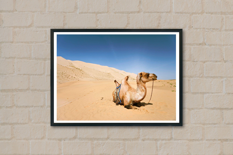 Camel Print-Camel Wall Art-Animal Print-Large Animal Print-Nature ...