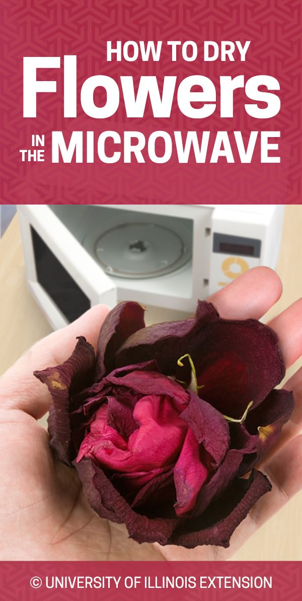 Great For Decoration Or Crafts U2014 How To Dry Flowers In The Microwave!