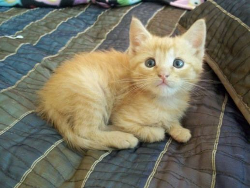 adorable ginger kitten! #kittens #ginger #kittens #gingerkitten adorable ginger kitten! #kittens #ginger #kittens #gingerkitten adorable ginger kitten! #kittens #ginger #kittens #gingerkitten adorable ginger kitten! #kittens #ginger #kittens #gingerkitten