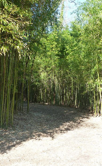 Bamboo Forest Travel Vacation Ideas Road Trip Places To