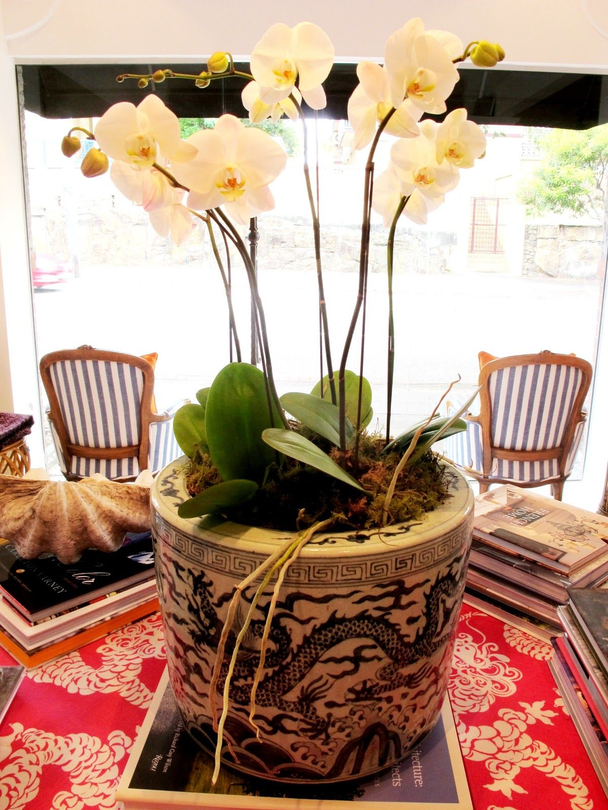 Fresh white orchids in a blue and white planter all things