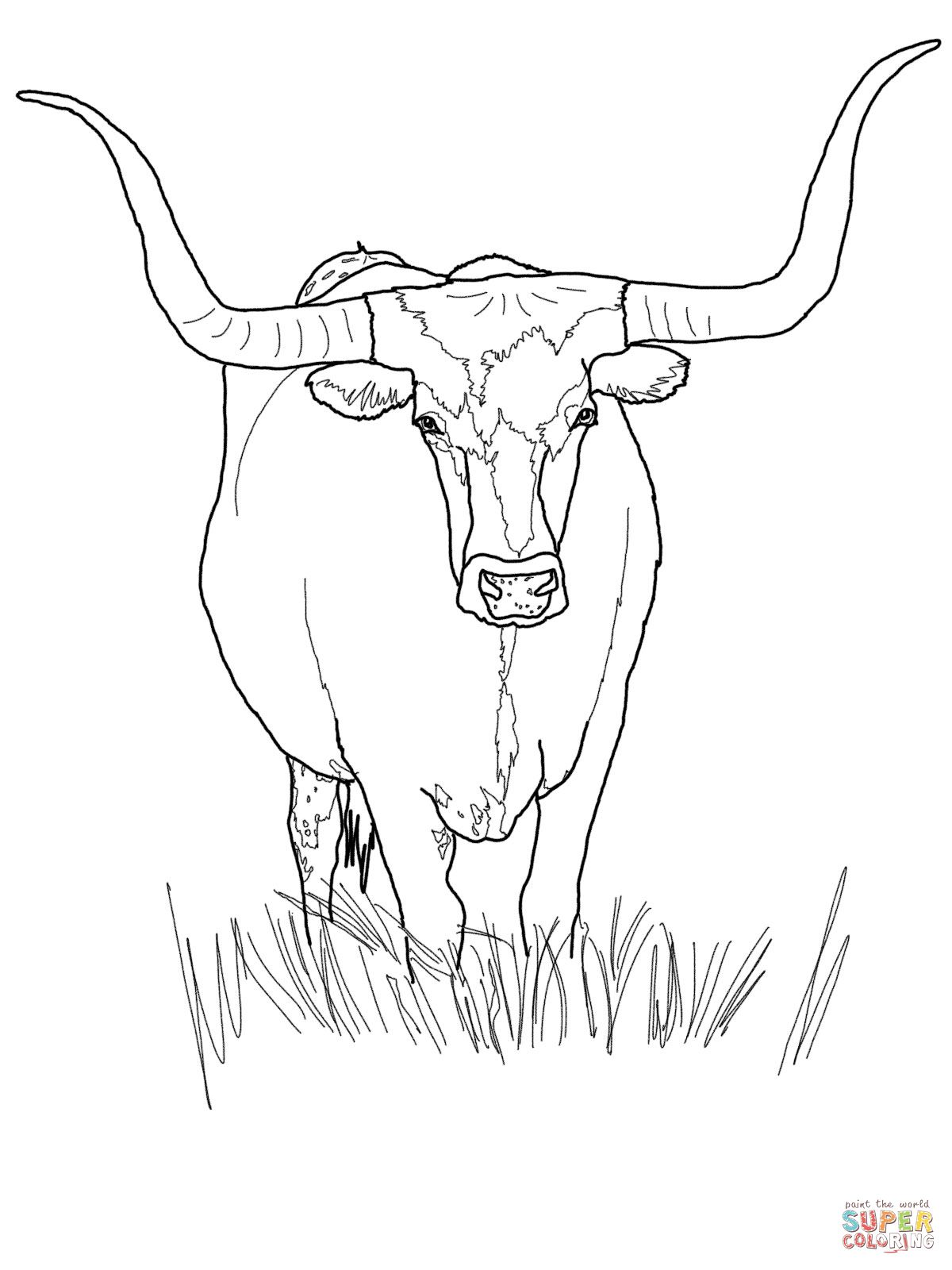Texas Longhorn Cattle Coloring Page Jpg Cow Coloring Pages