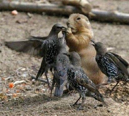 its mine stupid birds