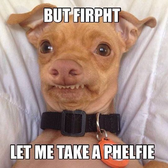 Phelfie Funny Dog Pictures Funny Sites Funny