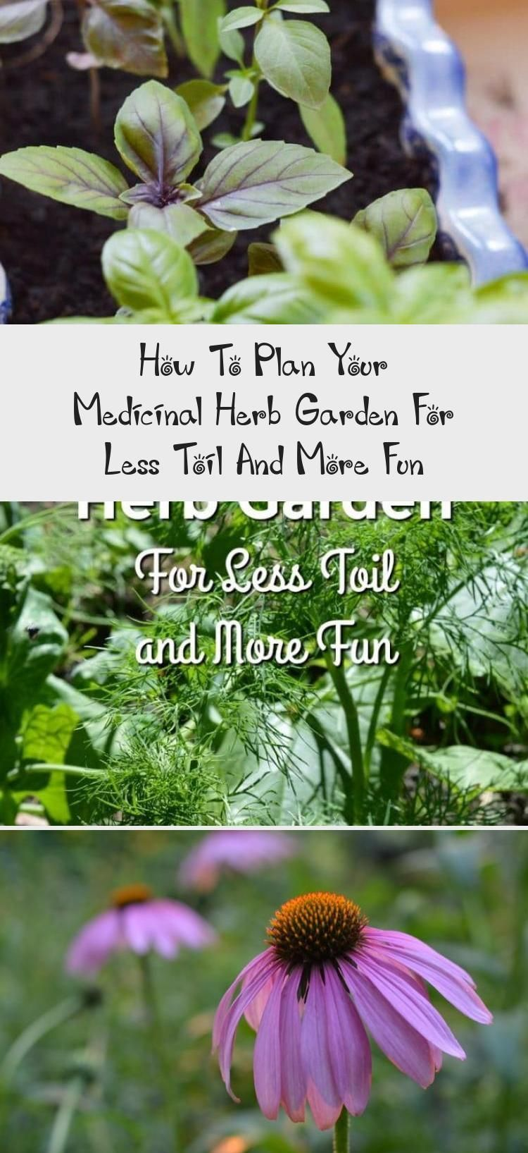 How To Plan Your Medicinal Herb Garden For Less Toil And More Fun  Gardenfun
