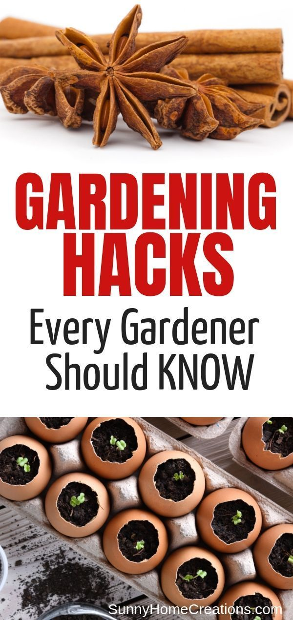 7 Brilliant Gardening Tips is part of Gardening tips, Gardening for beginners, Diy garden decor, Vegetable garden, Tips, Hacks - Awesome gardening tips to make your garden the best it can be  These hints, hacks and tips will make gardening easier and more enjoyable