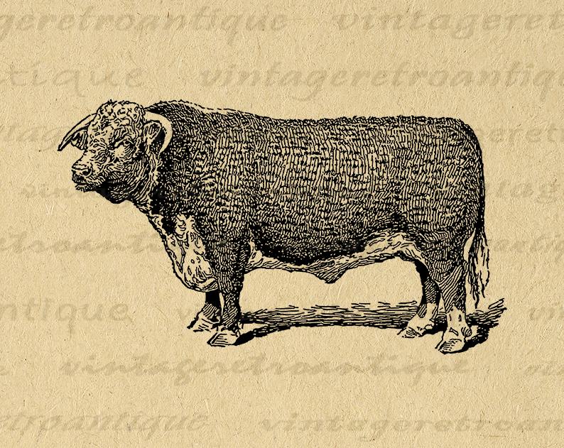 Hereford Bull Cow Printable Graphic Image Farm Animal Download Illustration Digital Artwork Antique Clip Art Printable Bull Artwork Cow Illustration Bull Cow