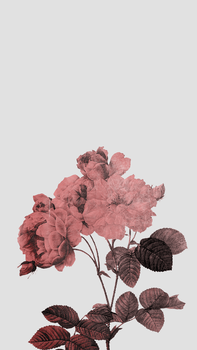 Rose Iphone Wallpaper 5 Png 640 1 136 Pixels Kertas Dinding