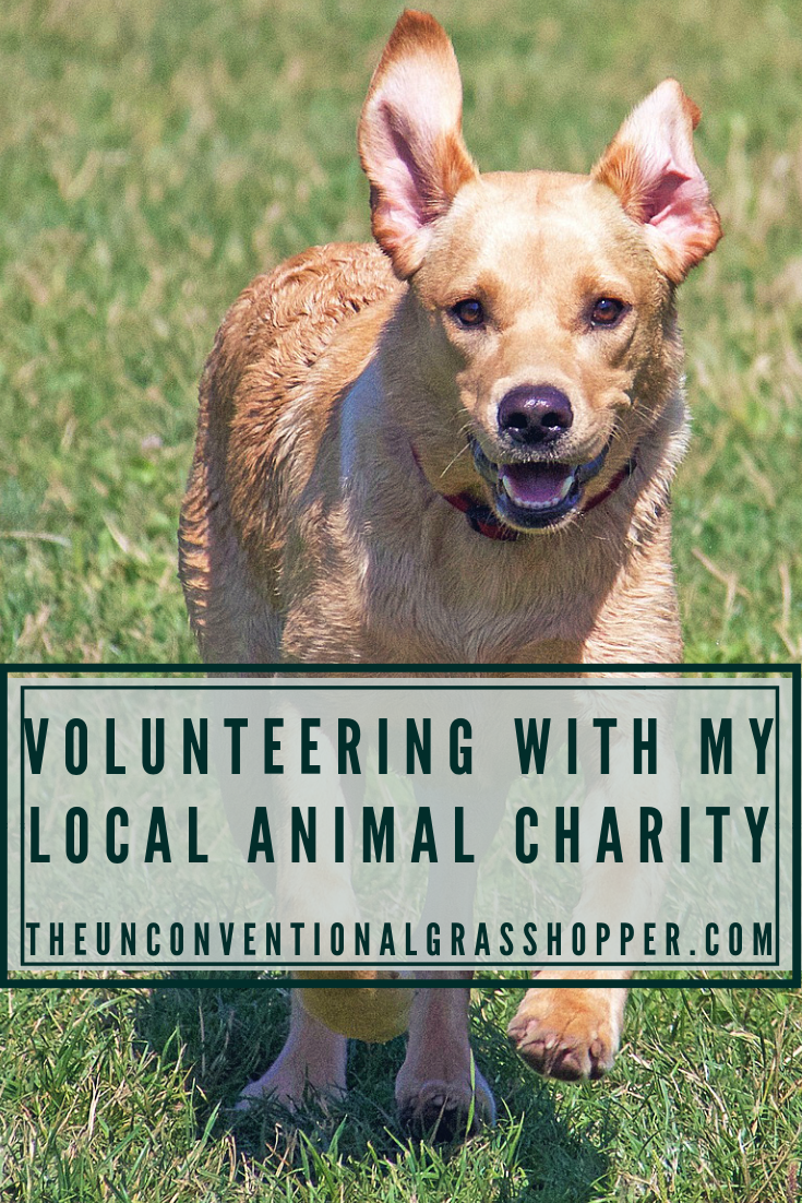 Every Other Weekend I Spend Sunday Morning Volunteering At My Local Animal Shelter Cleaning Dog Kennels An Volunteering With Animals Animals Animal Charities
