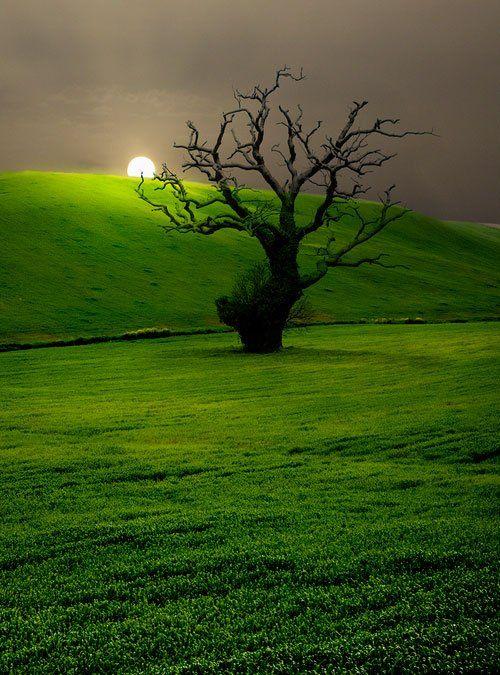 Vert et aube