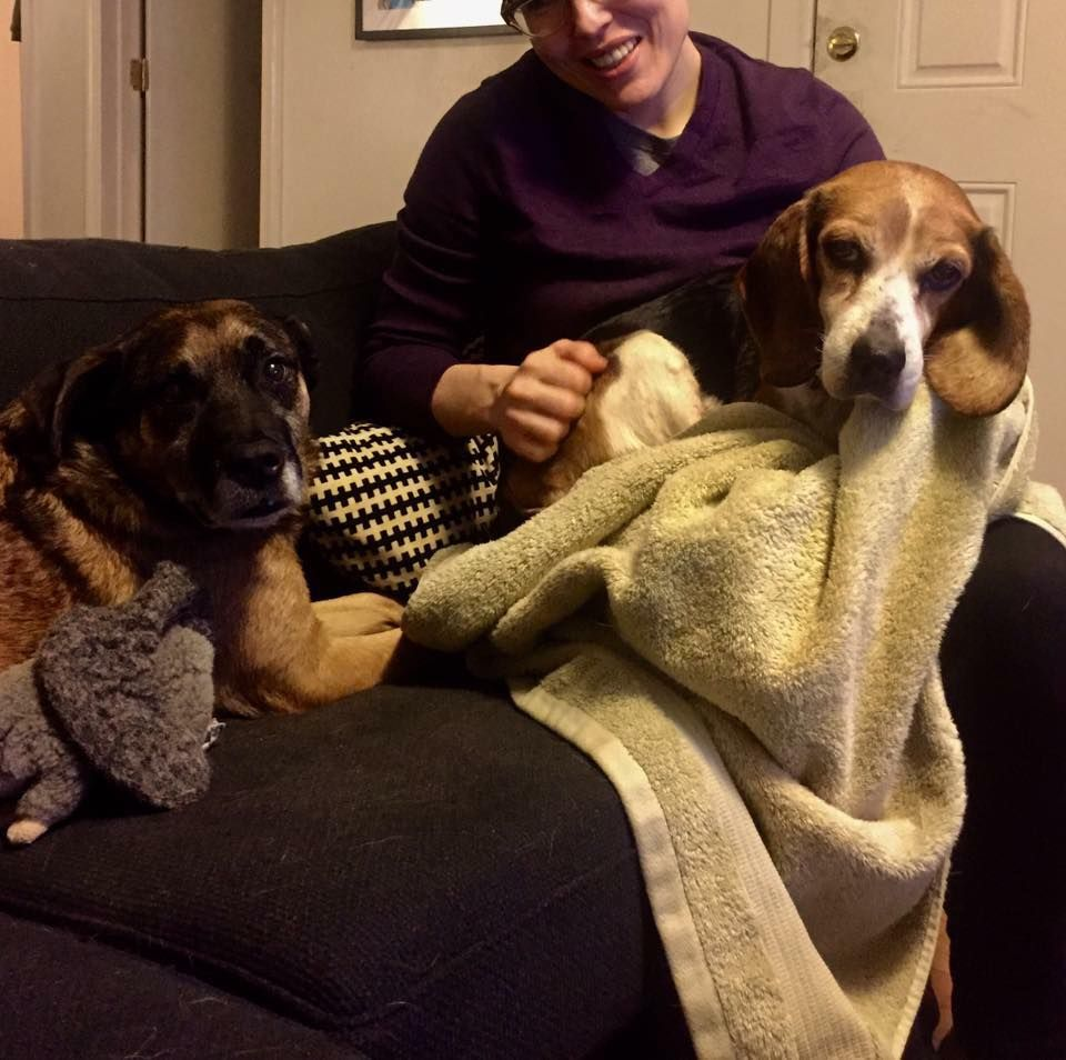 I Was Put Craigslist For 20 Her Pet Adoption Jojo Craigslist