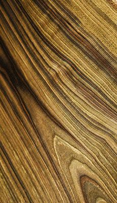 Incredible Grain Black Walnut Flitch Wood Wood