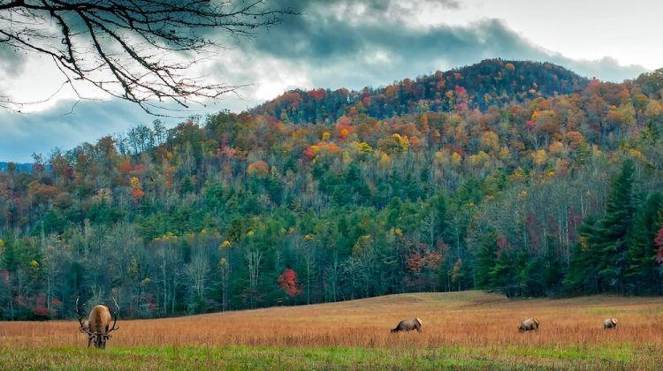 Best Campgrounds in North Carolina Best campgrounds