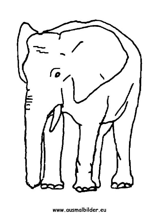 ausmalbild elefant zum ausmalen ausmalbilder