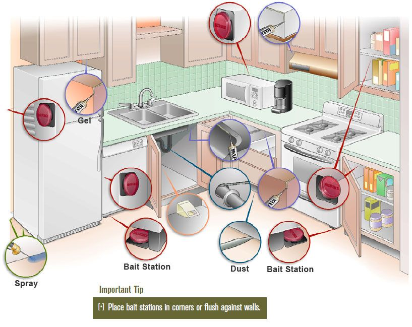 Bait placement guide for the kitchen | tips and cleaning | Pinterest ...
