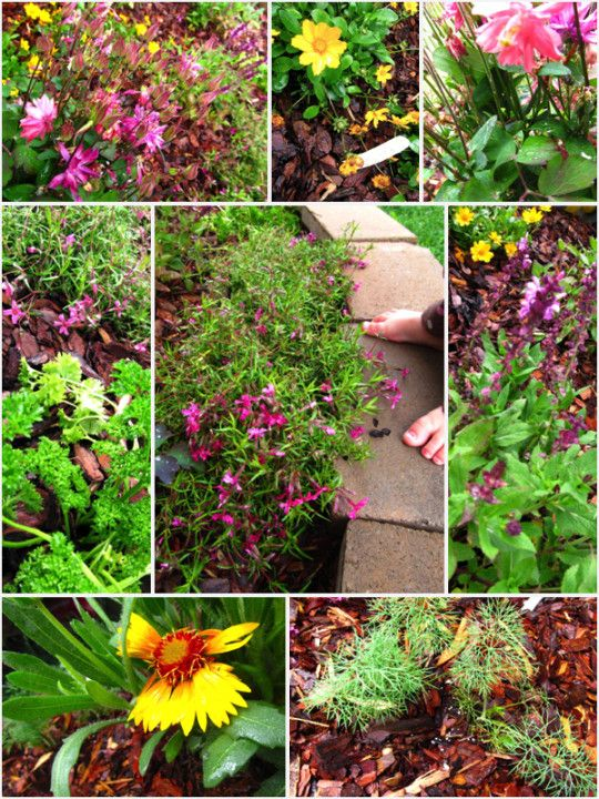 How To Build A Butterfly Garden, #digin With Homegrown U0026 Healthy