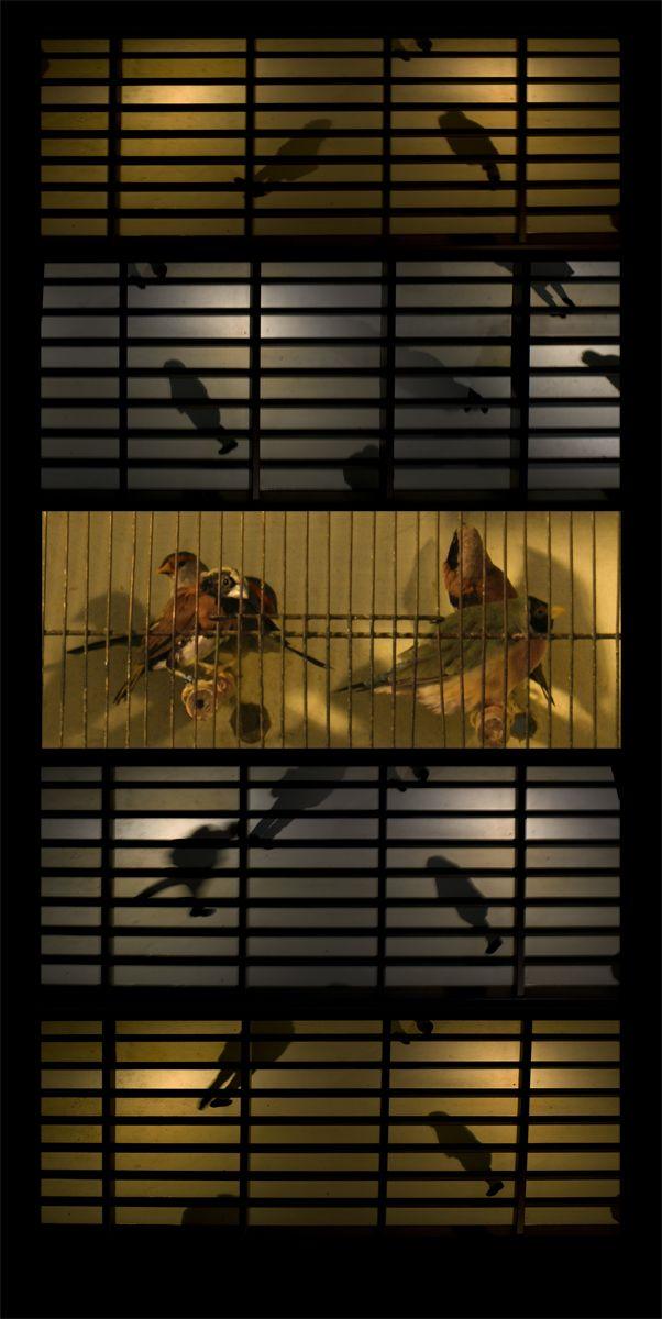 The caged people   Petra van der Put