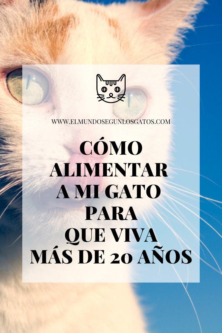 46 Ideas De Cuidados Para Gatos En 2021 Gatos Gatos Cuidados Cuidado Del Gatito