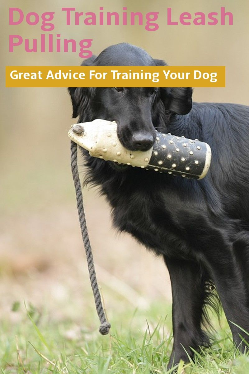 Dog Training Leash Pulling In Public Places Dog Leash Training