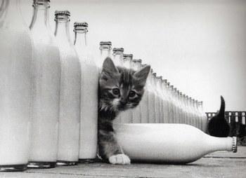 Chat bouteille de lait