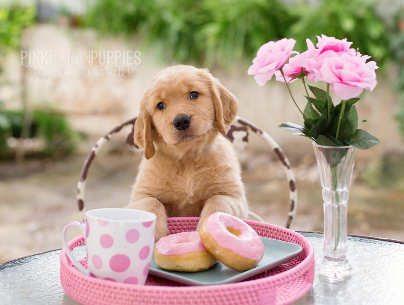 Pink Ribbon Puppies Golden Retriever Photography By Thank Dog