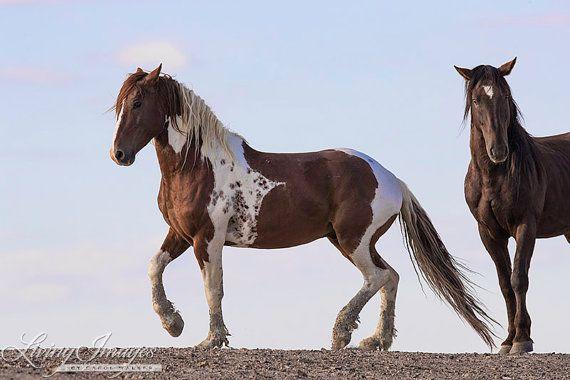Photo of Ähnliche Artikel wie Tango Tanz – bildende Kunst Wildpferd Foto – Wildpferd – Sand-Waschbecken auf Etsy