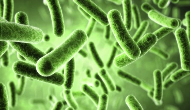 Inflammation  Candida  And Your Gut Flora  U00bb The Candida
