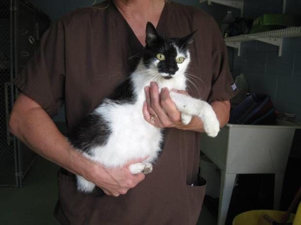 Sweet Cat Needs Rescue From Lake County Florida Kill Shelter 28123 County Road 561 Tavares Fl
