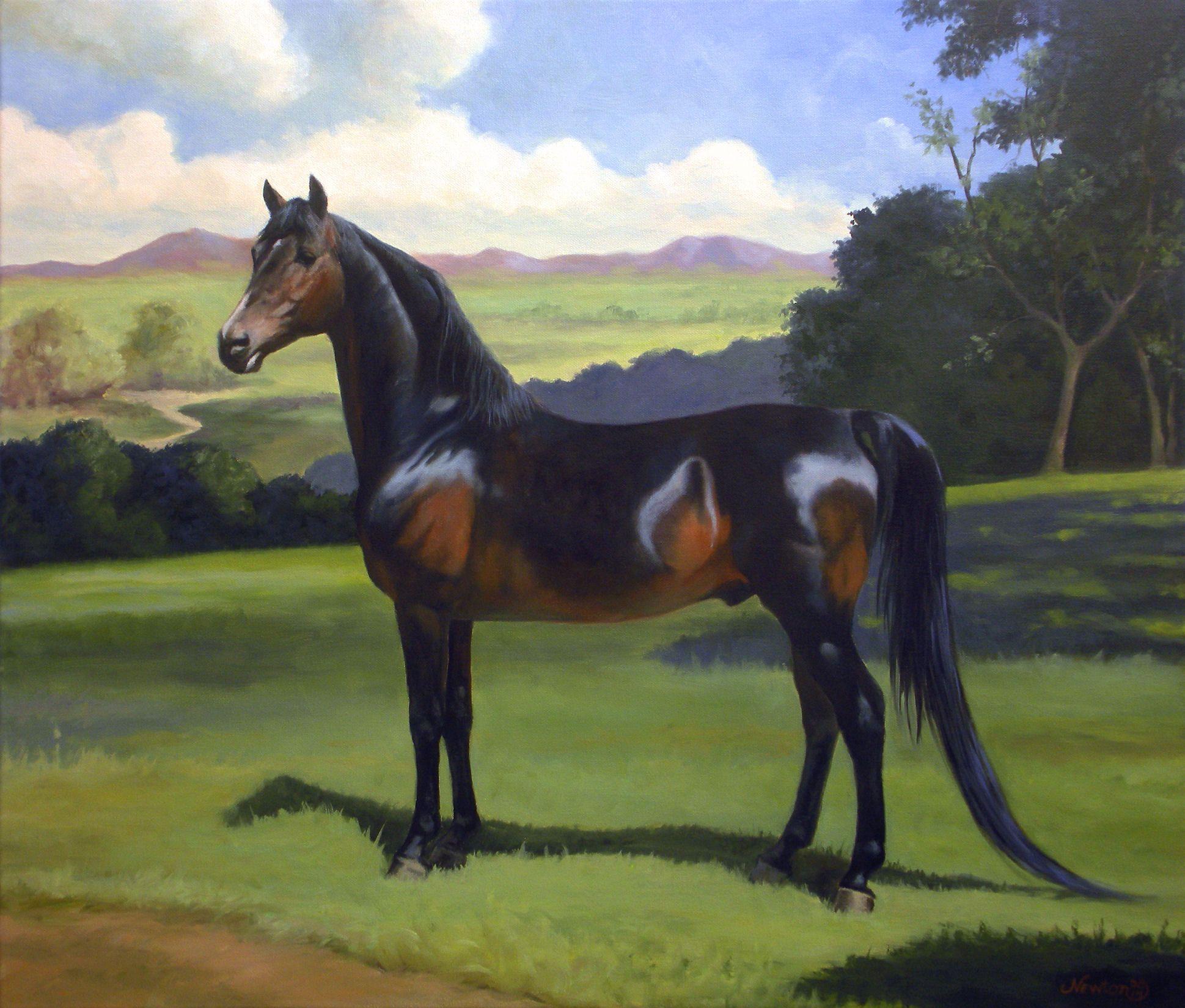 Jeanne Newton Schoborg- Morgan Stallion