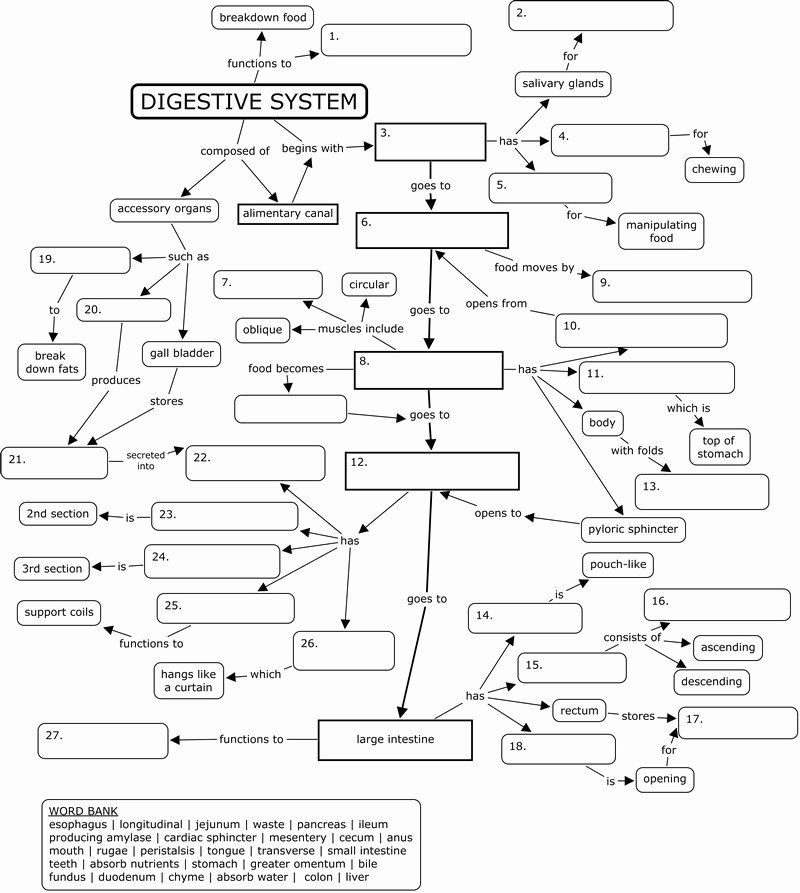 Digestive System Worksheet Answer Key Luxury Gcse Biology Digestion Topic Resource Pack Updated B In 2021 Digestive System Worksheet Concept Map Human Digestive System