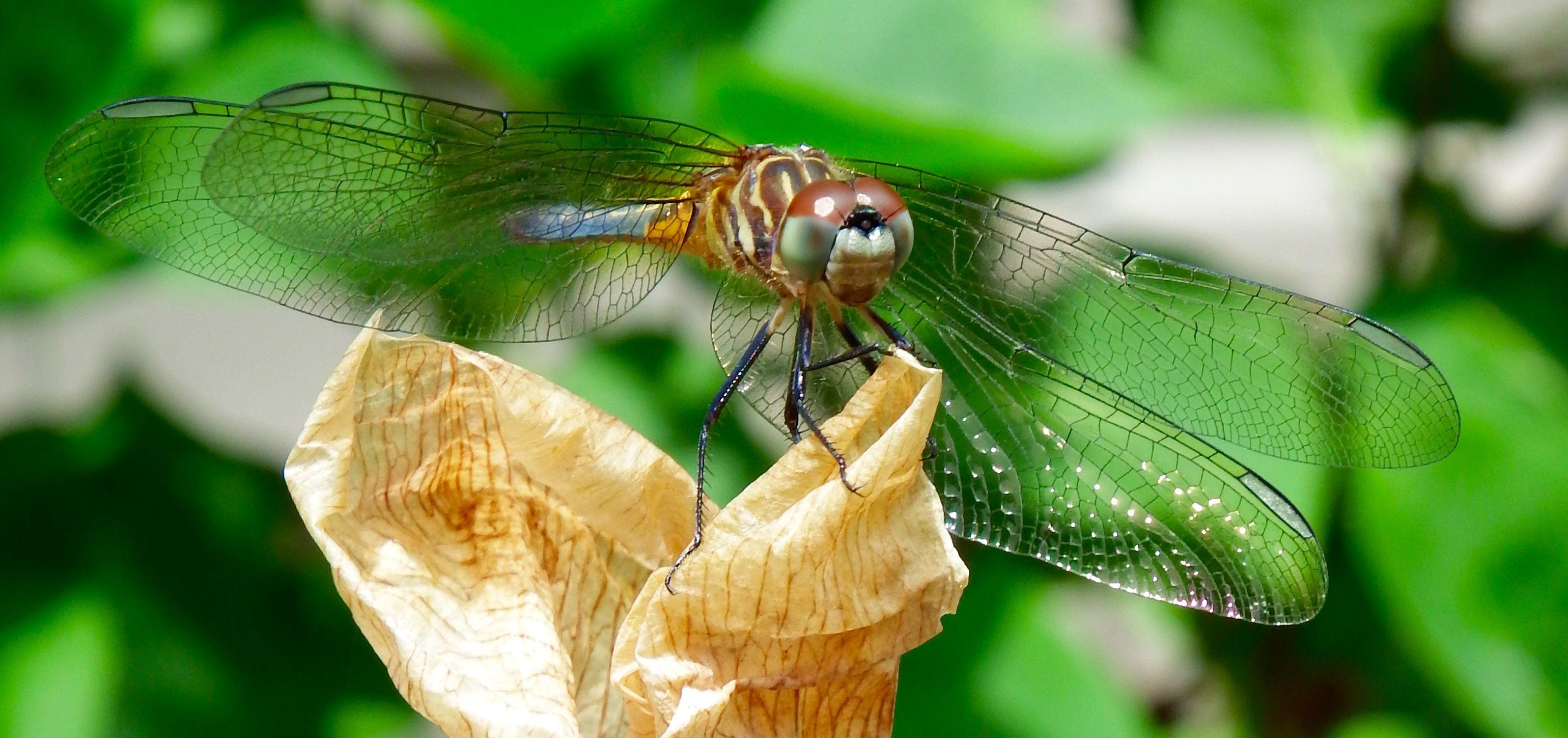Dragonfly in my fairy garden
