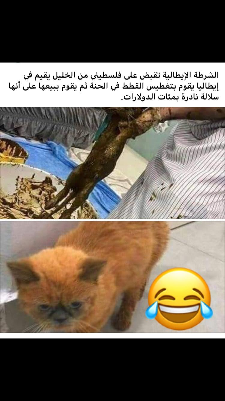 Pin By Saja Trad On هضامة Funny Arabic Quotes Fun Quotes Funny Arabic Funny