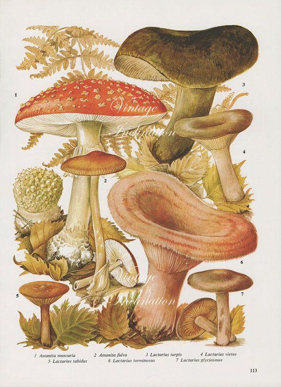 Vintage Antique Mushrooms Illustration Book By Vintageinclination 9 98 Vintage Mushroom Illustration Stuffed Mushrooms Vintage Botanical Prints