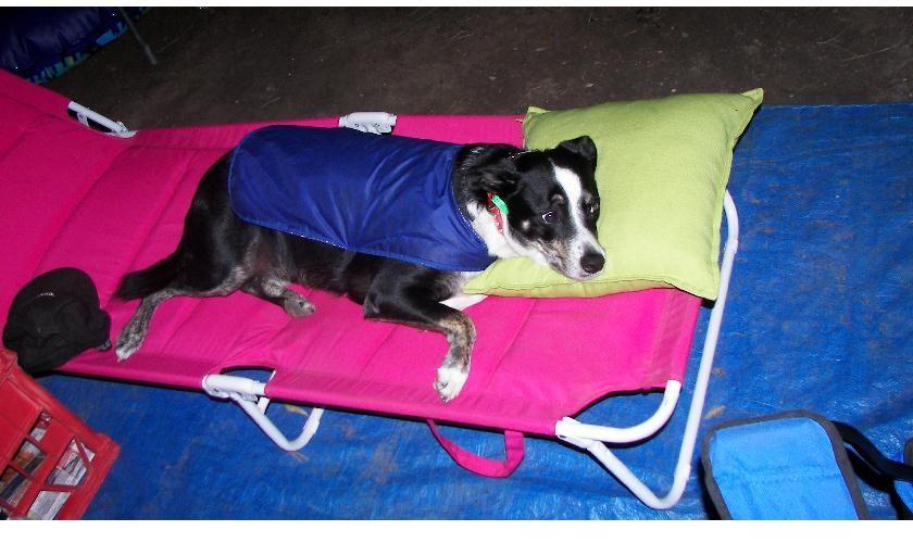 Caring loving pet sitter needed for diabetic jd