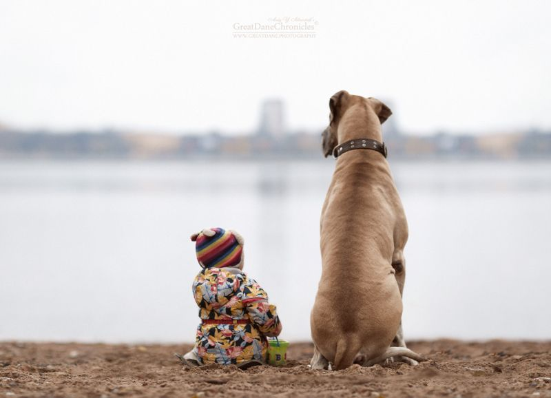 Little Kids And Their Big Dogs By Andy Seliverstoff - Tiny children and their huge dogs photographed in adorable portraits by andy seliverstoff