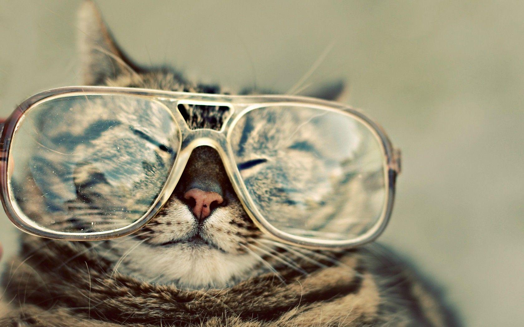 Too Big Hipster Cat Funny Cats Cat Glasses