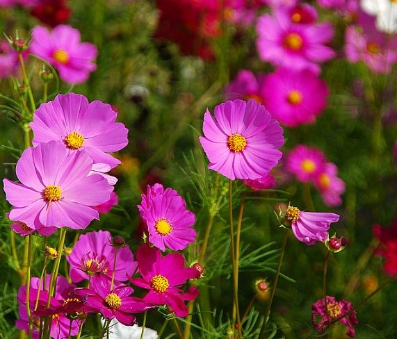Daftar Nama Bunga Gambar Bunga Cantik Indah Unik Dan Langka Lengkap