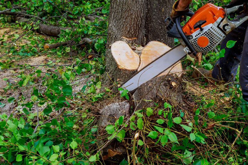 Arborists provides the trusted tree removal near me