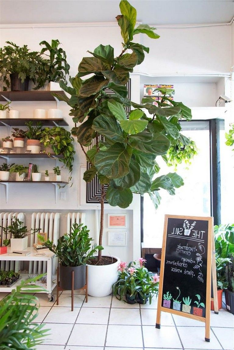 good house plants for indoor decor ideas that you must have houseplants decorideas also rh pinterest