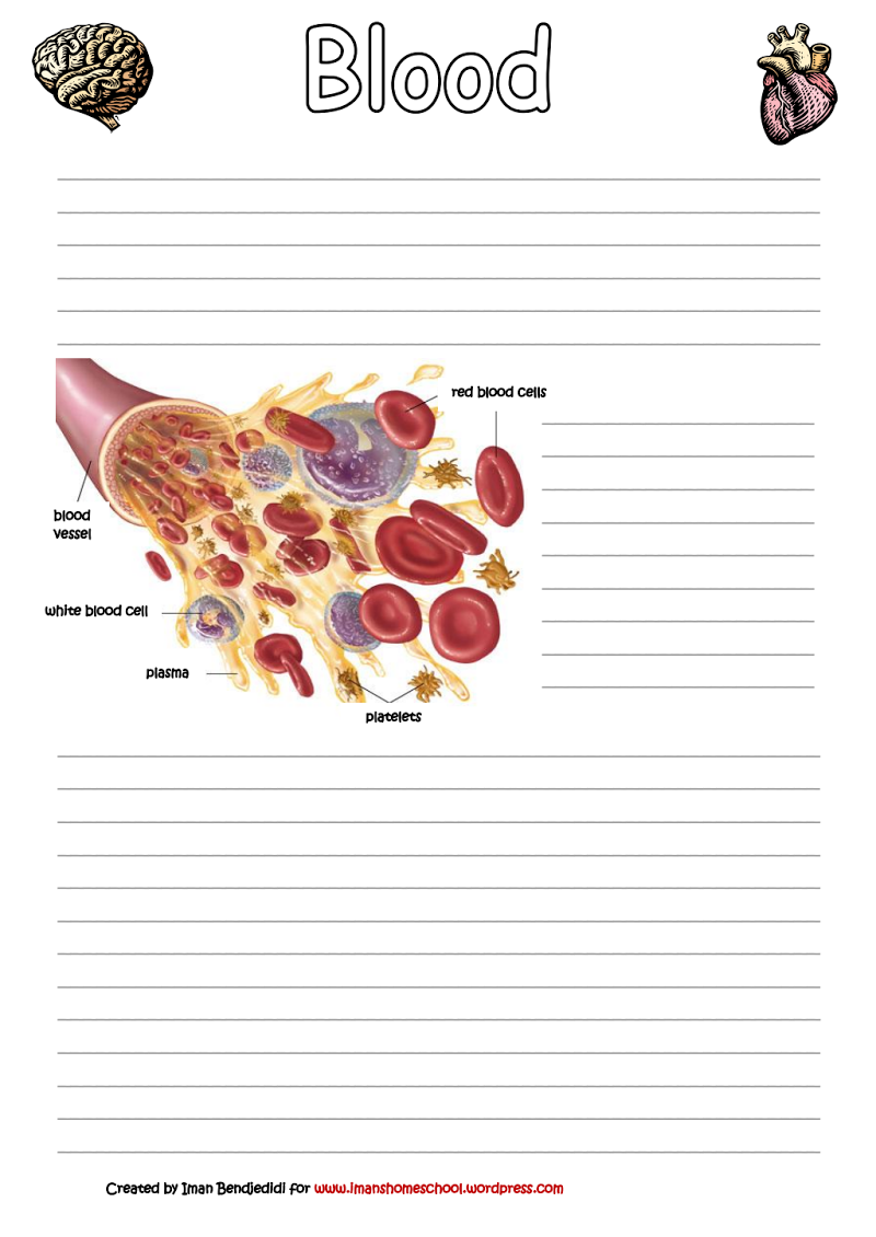 Page 1 Of Circulatory System Diagram Pinterest Red And White Blood Cell Cells