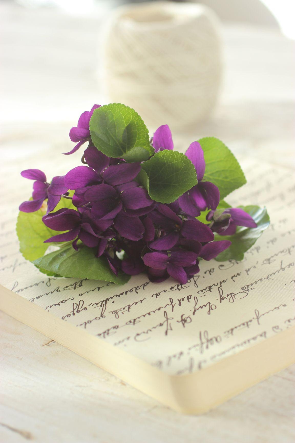 Violette di Parma