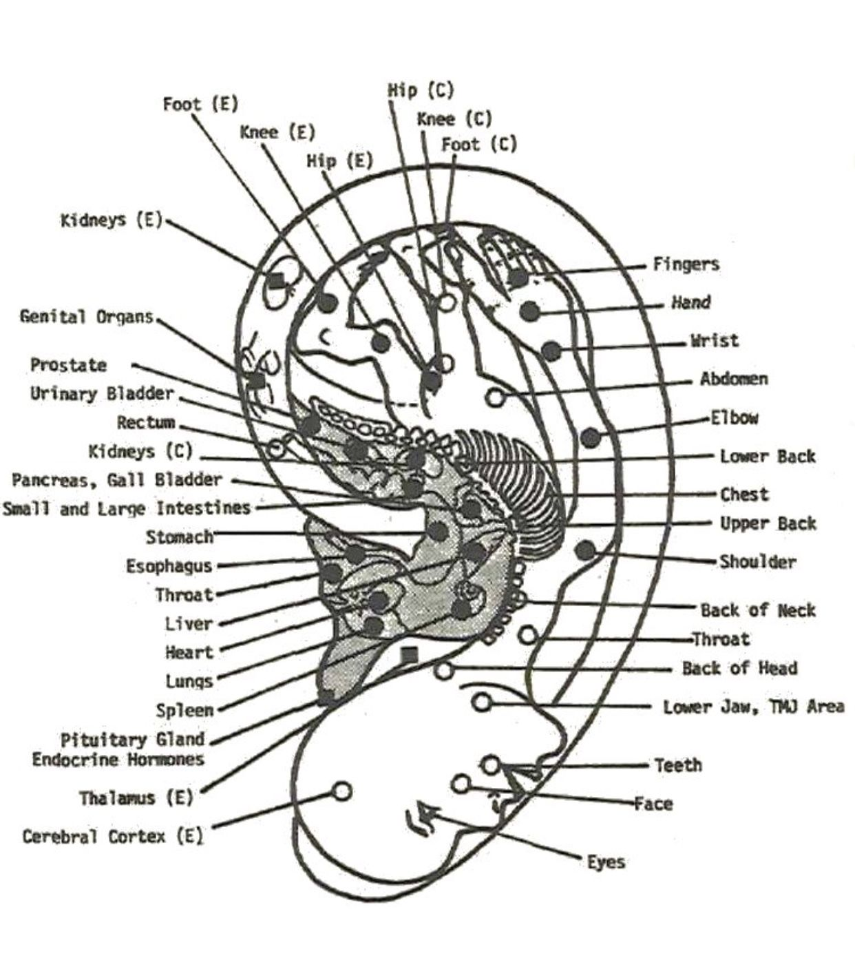 Pin By Allyson Chong On Health Auriculotherapy Auricular